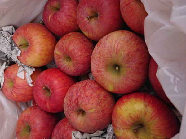 会津のリンゴ