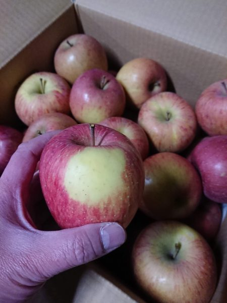 美味しいリンゴの販売