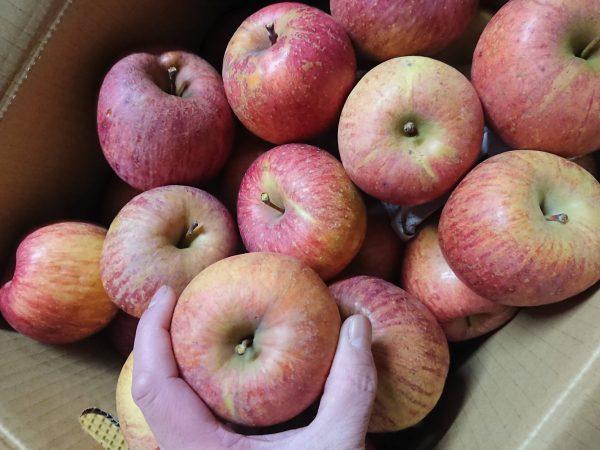 美味しいリンゴ販売中