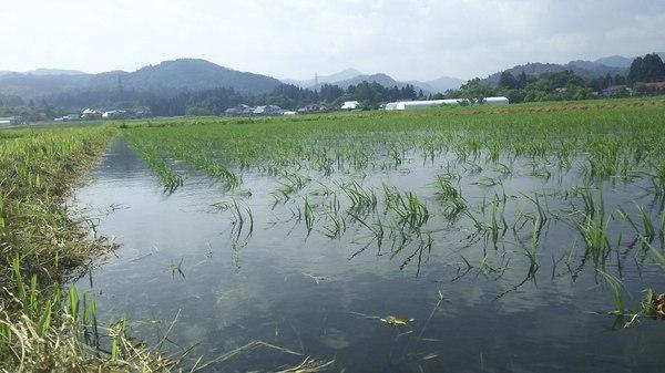 会津米20キロで送料無料(梅雨終わったの。。)