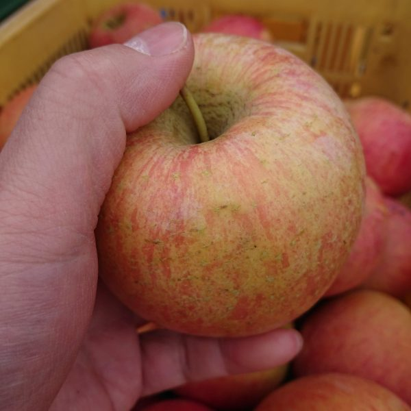 リンゴで自家製ジャム(会津米20キロは送料無料)