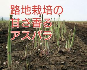 (送料無料)路地栽培、会津の朝採れ訳ありアスパラ1キロ