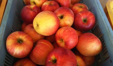 北会津産リンゴ少数3種類(36個)のミックス。