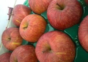 会津産訳あり樹上完熟葉取らずリンゴ「サンふじ」約30個~35個